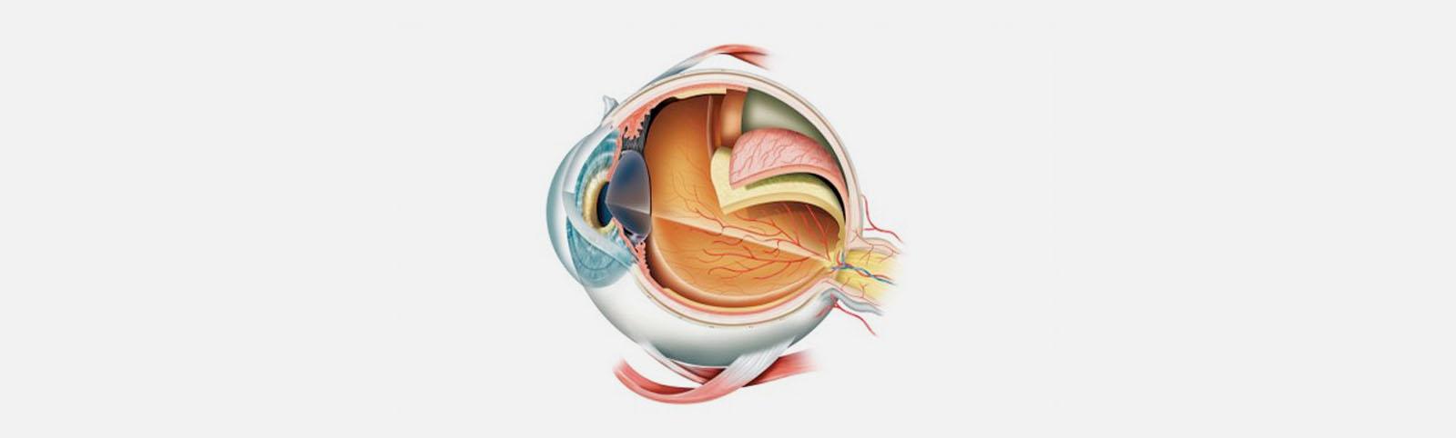 ojo capas